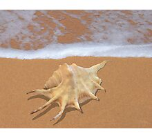 Lambis Shell by the Shore Photographic Print