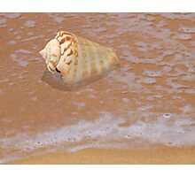 Conus Shell by the Shore Photographic Print