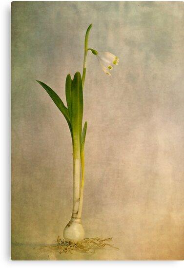 foretaste of spring by Priska Wettstein