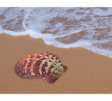 Fan Shell by the Shore Photographic Print