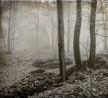 Fog and the Woods by Claudia Kuhn