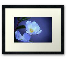 Delicate Flower on Blue Framed Print