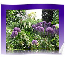 Alliums and Lupins in Reflection Frame Poster