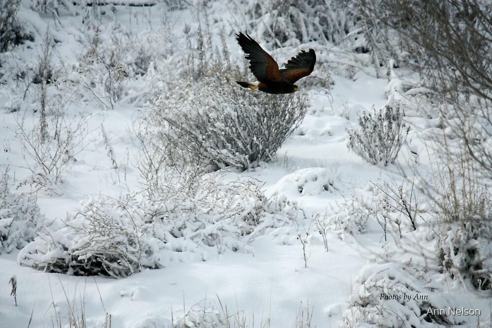 Winter's watchman by Ann Nelson