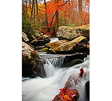 ~Go With the Flow~ Photographic Print