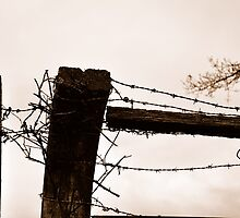 Barbed Wire Fence by gmcneilnz