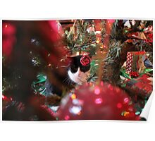 Cat on Christmas Morning Under the Tree Poster