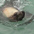 Sammy the Sea Lion by Karina  Cooper