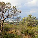 Perth CBD from Reobold Hill by shoshanah
