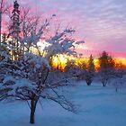 Winter Sunset Behind A Crab Tree by Ljartdesigns