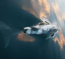 Doubtful Dolphins #3 by Odille Esmonde-Morgan