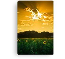 Under Skies Of Gold Canvas Print