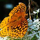 Great Spangled Fritillary 3 by Brooke Winegardner