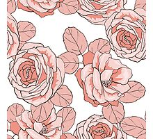 Roses in line Photographic Print