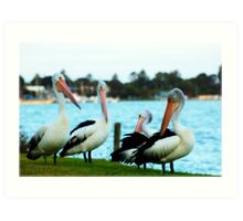 ~The Pelicans Point Of View~ Art Print