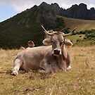 Cow at Puerta San Glorio, Picos de Europa by Christopher Cullen
