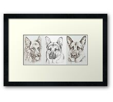 Barney, Merlin and Sadie - GSD portraits Framed Print