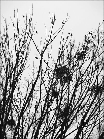 Birds and  branches  by Isa Rodriguez