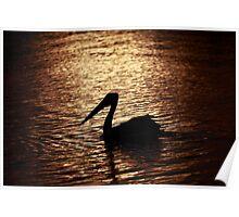 Sunset Pelican Port Macquarie Poster