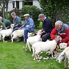 Sheep Shearing contest in Wales by stevenw888
