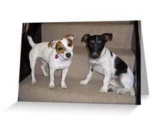2 Jack Russells posing on the stairs Greeting Card