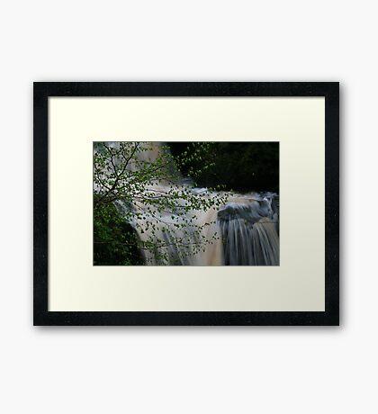fairy loup Framed Print
