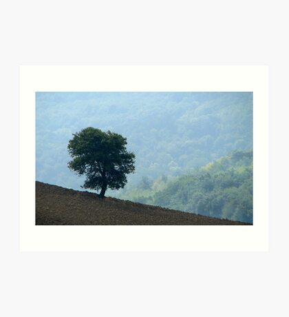 Lone Tree - Tuscan Hillside, Italy Art Print
