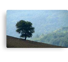 Lone Tree - Tuscan Hillside, Italy Canvas Print