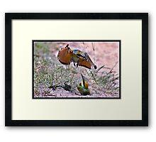 Rainbow Bee-Eater 111 Framed Print