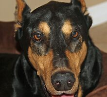 Rocky up close by jozi1