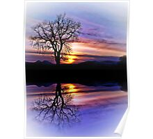 The Tree Of Reflections Poster
