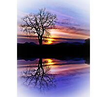 The Tree Of Reflections Photographic Print