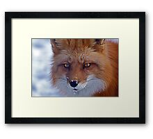 Snow fun in and around Montreal Framed Print