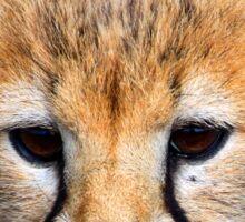 Baby Cheetah Sticker