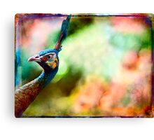 Peacock doing a double take. Canvas Print