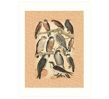 Falcons Art Print