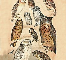 OWLS by Eric Kempson