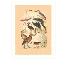 Waders Art Print