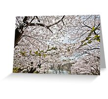 Sakura - Cherry Blossoms Greeting Card