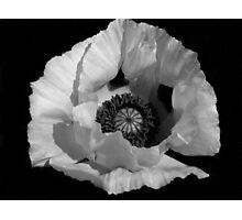 White Poppy Photographic Print