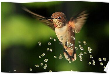 6,356 +  Views......TINY BUBBLES....56 FEATURES by RoseMarie747