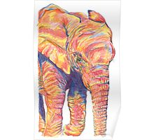 Colourful / Colorful Baby Elephant Portrait Poster