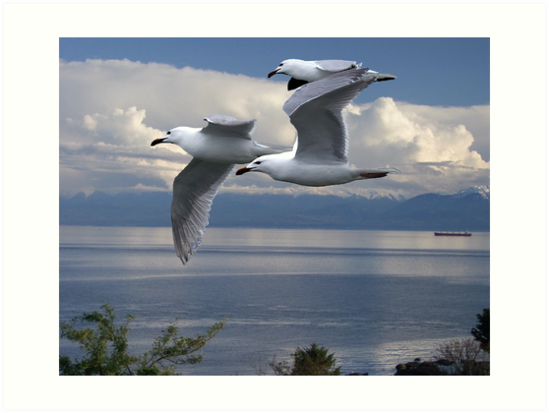 Gulls in Flight by George Cousins