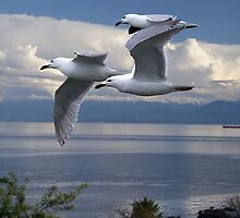 Gulls in Flight by George Cousins