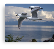 Gulls in Flight Canvas Print