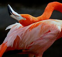 Caribbean Flamingo (Strike A Pose!) by Winston D. Munnings