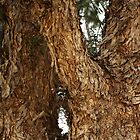 "Abstract in Nature... ""Peperboom, Vrystaat, Suid Afrika"" (Pepper Tree, Free State, South Africa) by Qnita"