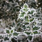 Frosted Holly by SPPDesign
