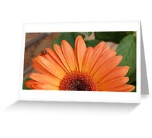 'Lil lady's sunrise Greeting Card