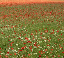 Flanders Fields by Rob Nunn